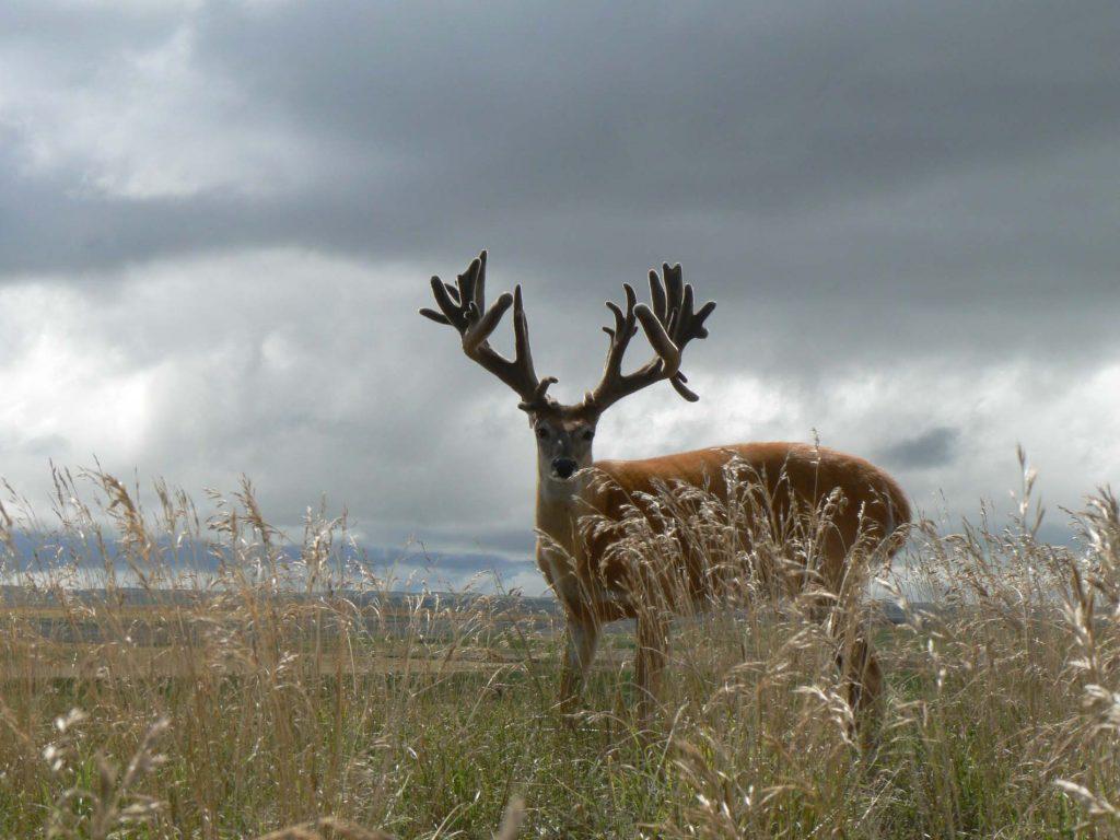 record trophy deer